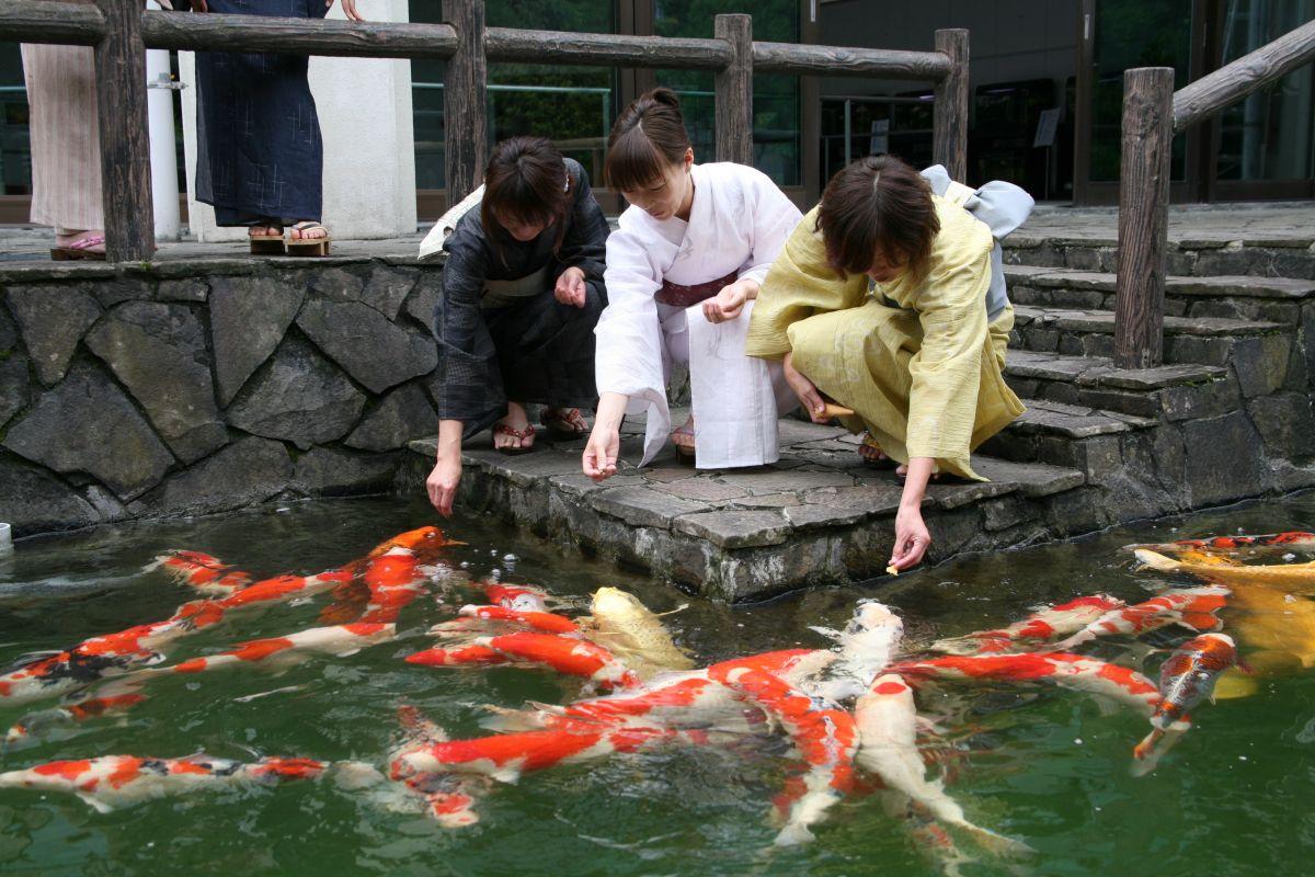 Ojiya Nishikigoi No Sato What To See Do Enjoy Niigata